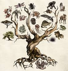 darwin s tree of on behance