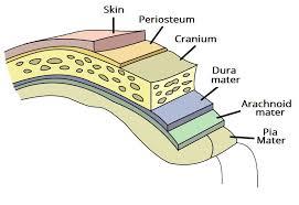 Floor Of The Cranium The Meninges Dura Arachnoid Pia Teachmeanatomy