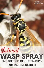 natural wasp killer get rid of wasp nests without chemicals