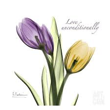 watercolor tulips tattoos on right shoulder photos pictures and