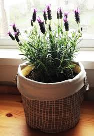 dress up your home with these indoor plants that donu0027t need