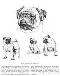 264 best pugs images on pinterest vintage dog pug dogs and history