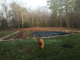 trading tillage for tarps an effective way to kill weeds and