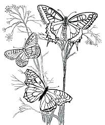 detailed butterfly coloring pages for adults printable butterfly coloring pages coloring pages butterflies adult