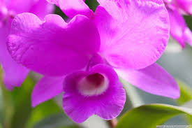 Beauty Garde by Flower Violet Precious Flower Green Forever Love Beauty Light