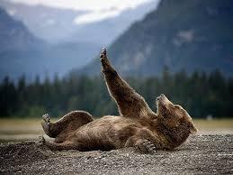 Funny Bear Meme - bears doing human things