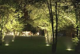tree lighting installation south west