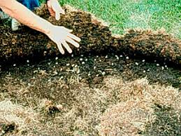 How To Get Rid Of Moles In The Backyard by How To Get Rid Of Raccoons Best Raccoon Control Tips Methods And
