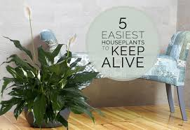 austin native plants 5 easiest houseplants to keep alive freytag u0027s florist