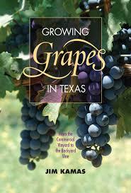 growing grapes in texas texas a u0026m university consortium press