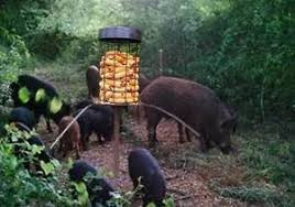 hog hunting lights for feeder wild boar hog hunting feeder up to 45 days without a refill