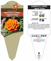 Marigolds Shade by French Marigold U0027janie Series U0027 Mirofoss