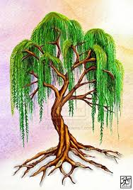 willow tree weeping willow with virtue roots by everiris