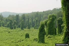 Mississippi forest images Invasive species mississippi forestry commission jpg
