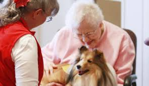How To Get A Comfort Dog Pet Partners Org Therapy Pets U0026 Animal Assisted Activities