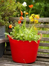 Outdoor Potted Plants Full Sun by How To Plant A Poppy Container Garden Hgtv
