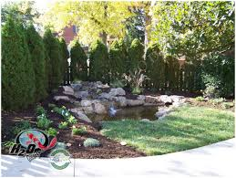 backyards excellent pond fish for your backyard 37 ideas