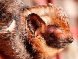 small bat celebrate bat week with 13 awesome facts about bats
