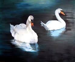 tranquility tranquility swans on the rideau river in ottawa fine art