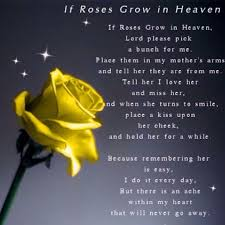 if roses grow in heaven pictures photos and images for