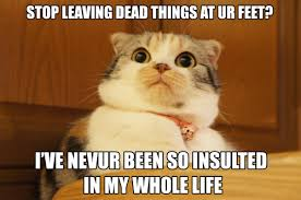 Old Fashioned Memes - meme spot old fashioned cat is scandalized meet me at the
