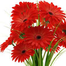flowers images gerbera flowers fresh flowers bengaluru anandaa enterprises