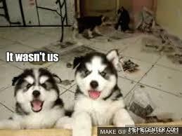 Funny Husky Memes - images surprised husky meme