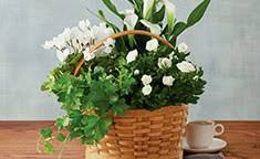 condolences gifts sympathy gifts baskets flowers food gifts harry david
