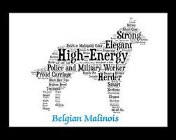 belgian malinois en espanol belgian malinois art etsy