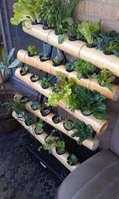 171 best vertical garden images on pinterest vertical gardens