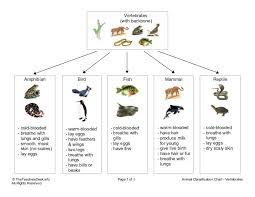 the 25 best vertebrates ideas on pinterest vertebrates and