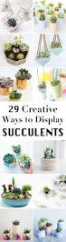 best 25 indoor succulents ideas on pinterest cacti and
