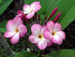 Tropical Fragrant Plants - gardeners u0027 dirt create your own tropical garden area at home