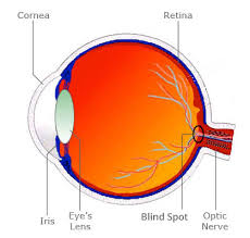 What Is The Blind Spot Troxler Effect The Illusions Index