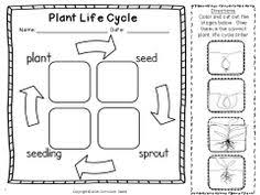 plant life cycle work jobs pinterest plant life