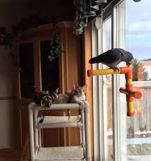cat tower kuranda dog beds