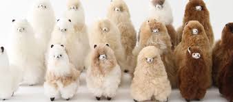 Alpaca Sheep Meme - magical children s gifts me me new york