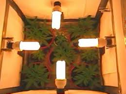 best light to grow pot marijuana grow lights complete guide thc 420