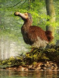 dodo bird facts and pictures