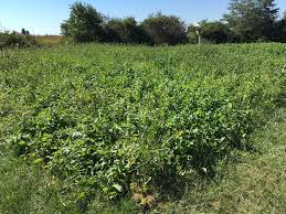 programs natural resources weeds and buckeye hills agriculture and natural resources programs news