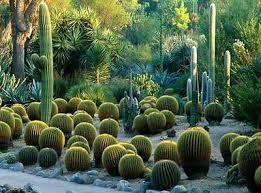 Huntington Botanical Gardens Pasadena by 80 Best Huntington Library Nature U0026 Art Images On Pinterest