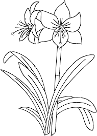 flowers coloring pages free printable pictures coloring pages