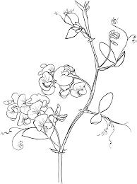 lathyrus odoratus april tattoos pinterest vine tattoos