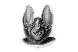 animal animal head bat face 5 from vintageprintable com