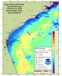 Daytona State College Map by What It U0027s Like To Be The Right Whale Guy Right Whale Migrations