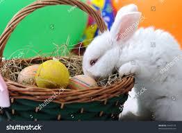 rabbit easter basket white beautiful rabbit easter bunny eggs stock photo 75447133