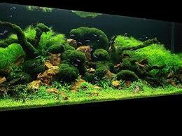 Aquascape Designs Inc 252 Best Aquascapes Images On Pinterest Aquarium Ideas