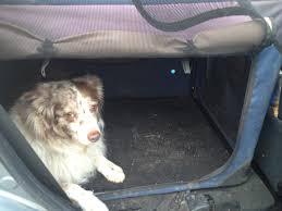 d bar d australian shepherds dog crates u0026 how to choose one