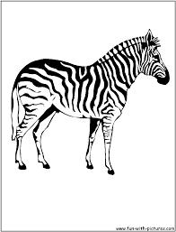 letter zebra print colouring