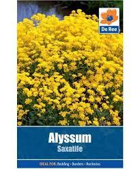 Flower Seeds Online - where could i buy flower seeds online quora